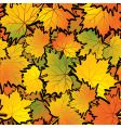 maple leaf abstract background vector image
