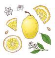set lemon fruits isolated elements vector image
