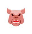 angry pig evil boar grumpy hog aggressive piggy vector image vector image