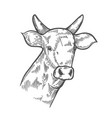 hand drawn cows head vector image vector image