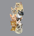 vertical poster with cats vector image