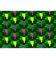 vine grape pattern vector image