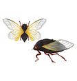 Cicada vector image vector image