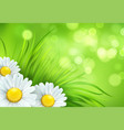 frash spring green grass and chamomile background vector image vector image
