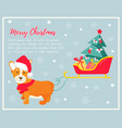 holiday greeting card with cute corgi dog vector image vector image