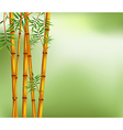 Bamboo on old grunge green and white texture backg vector image vector image