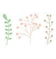 branches plants with flowers and leafs vector image