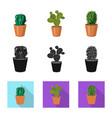cactus and pot symbol set vector image