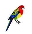 colorful tropical parrot vector image