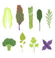 fresh salad greens and leaves set vegetarian vector image