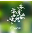 oregano on blur background vector image