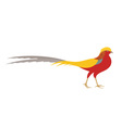 Pheasant Golden Pheasant vector image vector image