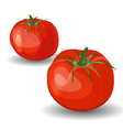 Set of Two Glossy Red Tomatoes vector image