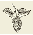Beer hop vector image