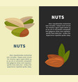nuts promotional vertical posters with almonds and vector image