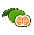 Green Grapefruit Jaffa Sweetie vector image vector image