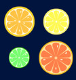 set of slices of orange lemon lime grapefruit vector image
