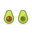 avocado - cut with bone and cut without bone vector image vector image