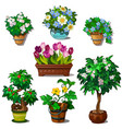 Set of domestic and garden plants in vase and pots vector image