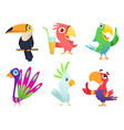 tropical parrots characters feathered exotic vector image