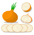 vegetable round onion vector image