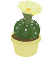 astrophytum cactus icon isolated on white vector image