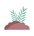 bush leaves branch nature icon vector image