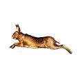 hare rabbit from a splash watercolor colored vector image vector image