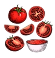 Tomato drawing set Isolated tomato sliced vector image vector image