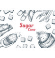 collection sugarcane cane sugar and sugarcane vector image