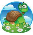 cute tortoise vector image vector image