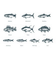 fishes on white background drawn vector image vector image