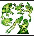 frog green drawing vector image