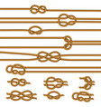 ropes knots realistic set vector image