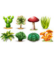 set of different cactus vector image