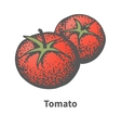 sketch hand-drawn red tomato vector image vector image