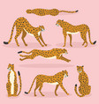 collection cute hand drawn cheetahs on pink vector image vector image