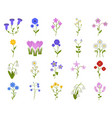 wildflower icon set in flat style coronaries vector image vector image