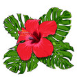 beautiful tropical flowers bouquet vector image vector image