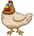 Fat spring chicken