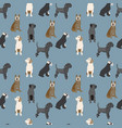 pattern with dogs colorful background vector image