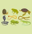 reptiles set lizard snake turtles snail cartoon vector image vector image
