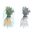 watercolor carrot drawing vector image vector image