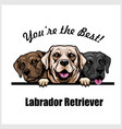 white brown and black labrador retriever vector image vector image