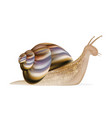 a snail vector image