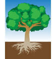 tree with roots and dense foliage vector image vector image