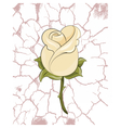 Abstract yellow rose vector image vector image