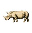 rhinoceros from a splash watercolor colored vector image vector image
