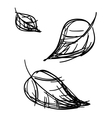 stylized leaves sketch vector image vector image