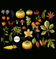 big set of autumn leaves fruits berries vector image